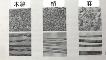 天然繊維の断面図